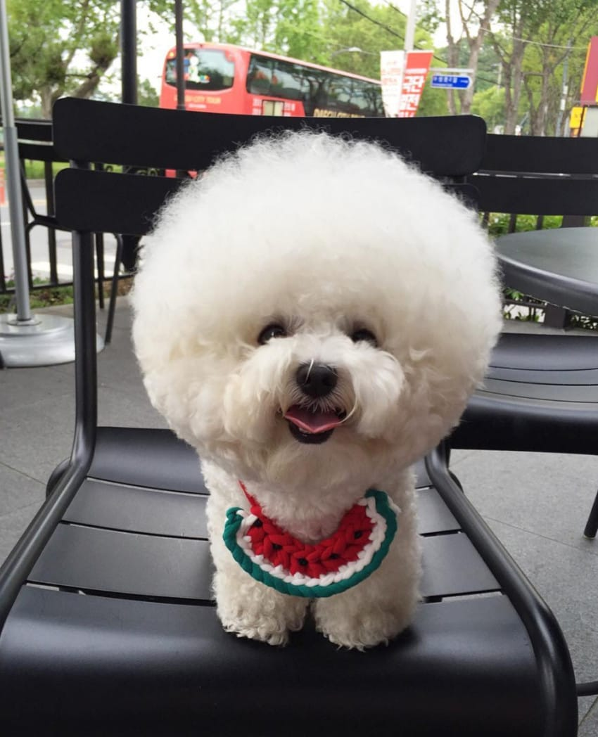 Download Fluff Ball Adorable Dog - 666  Graphic_196880  .jpg